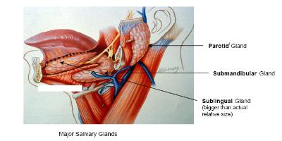 Head & Neck Surgery – Salivary Gland Surgery